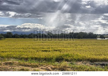Amazing Beams Of Sunlight On Crops