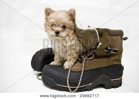 Puppy and Boots