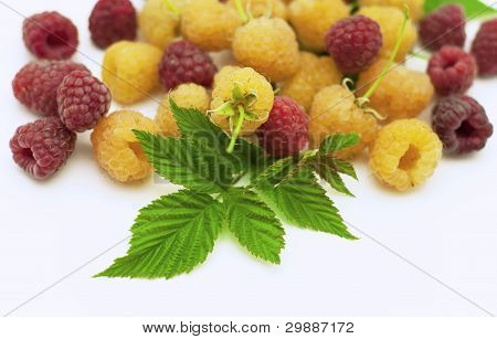 yellow raspberry