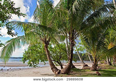 grüne Palmen auf das Gras und exotischen Sonnenstrand