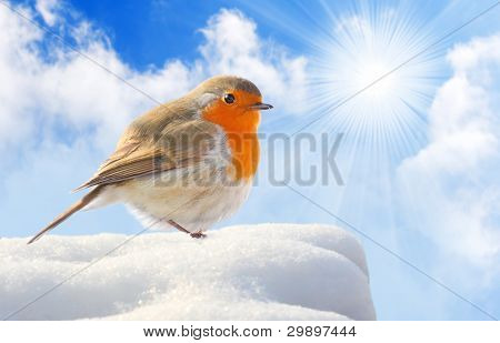 Birdie  (European Robin - Erithacus rubecula) on a snowy roof.  Winter sunny day concept.