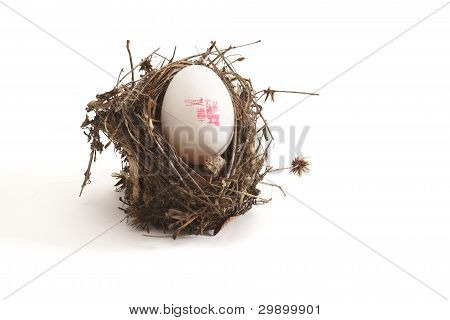 Small bird nest with XL egg isolated