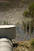 picture of bull rushes  - Polluted pond with drain pipe and bull rush - JPG