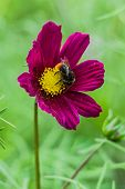 Beautiful Purple And Yellow Flower With Big Bee poster