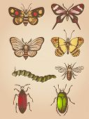 pic of caterpillar  - Set of vector hand drawn vintage butterfly and insects - JPG