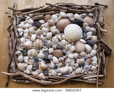 Sea shells / sea shells - texture - pebbles, driftwood and stones.