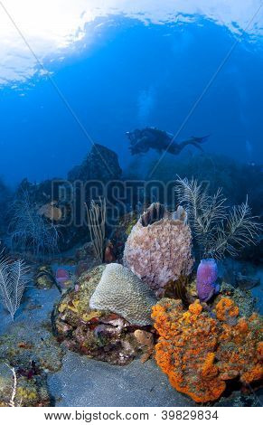 Underwater Photographer In St Lucia