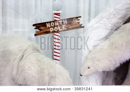 polar bears by north pole