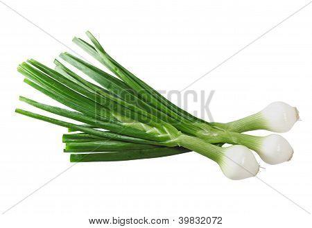Cebollitas Onion