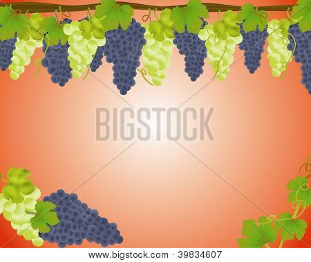White And Black Grapes Background