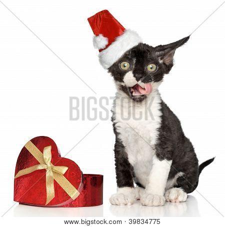 Devon Rex Kitten In Santa Christmas Red Hat