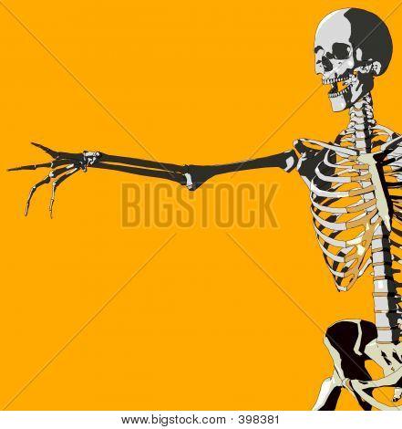 Bone 107