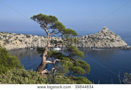 Pine over the sea.