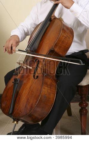 Professional Musician