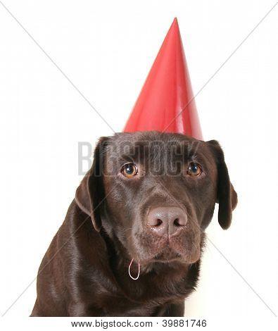 um laboratório de chocolate com um chapéu de festa na