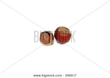 Hazel-nut