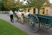 foto of ox wagon  - Costumed villager recreates 19th Century daily life in Mumford NY October 2006 - JPG