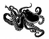 picture of cuttlefish  - Wild ocean octopus with long tentacles for sealife design - JPG