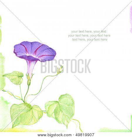 watercolor convolvulus