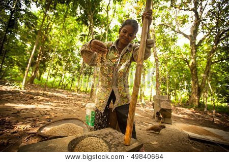 BERDUT, MALAYSIA - APR 8: Unidentified woman Orang Asli thresh rice to remove chaff on Apr 8, 2013 in Berdut, Malaysia. More than 76% of all Orang Asli live below the poverty line.
