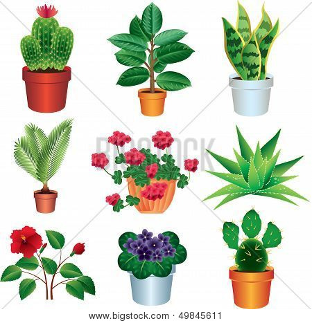Set of House Plants