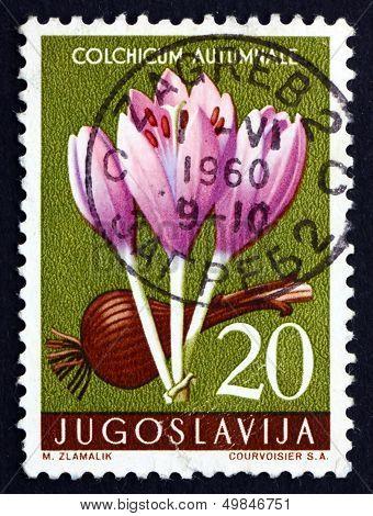 Postage Stamp Yugoslavia 1957 Autumn Crocus, Colchicum Autumnale