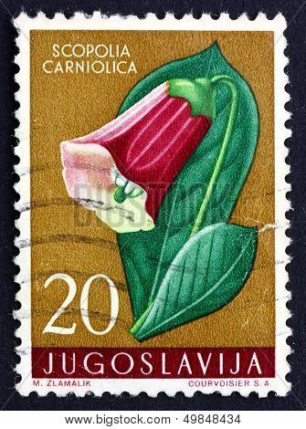 Postage Stamp Yugoslavia 1959 Henbane Bell, Poisonous Plant
