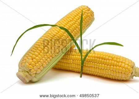Isolated Corn And Sprout