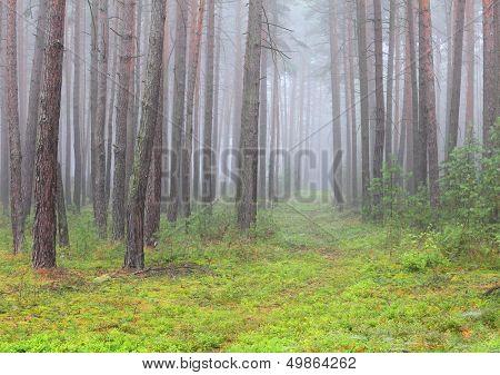 Autumn misty day in The Slavkovsky Forest (Slavkovsky les) Natural park in Czech Republic, Europe.