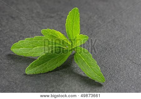 Fresh stevia leaves on a slate plate