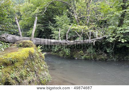Rope Bridge Over The River