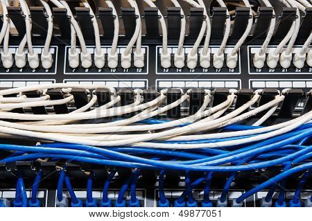 Blue And White Ethernet Cables In Patch Panel.