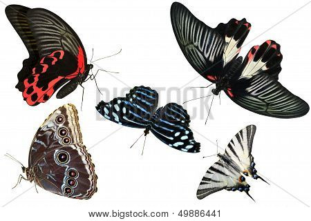 butterflies are insects collection of isolated on white background