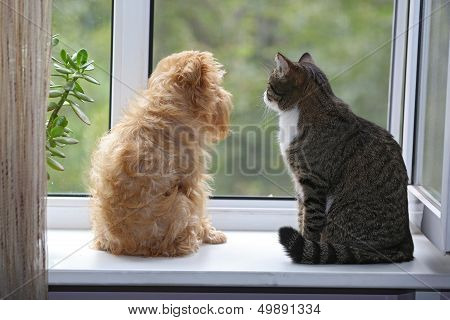 Cat And Dog On The Window