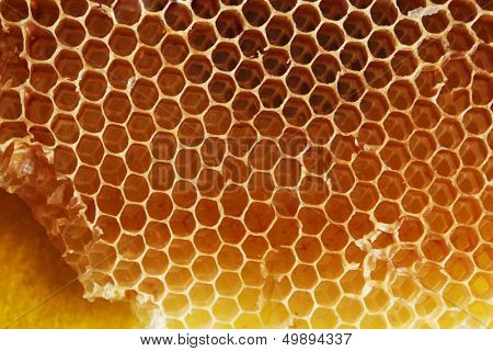 Honey bee honeycomb