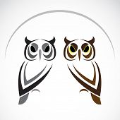 picture of night-blooming  - Vector image of an owl on white background - JPG