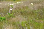 stock photo of arum lily  - old fence arum lilies and sedges - JPG