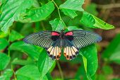 pic of butterfly-bush  - Big beautiful butterfly sits on the leaf of a tree - JPG