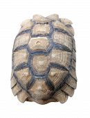 image of carapace  - Texture of Turtle carapace isolated white background - JPG