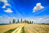 picture of senesi  - Tuscany farmland and cypress trees and white road country landscape - JPG