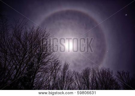 Moon Corona Over Treetops