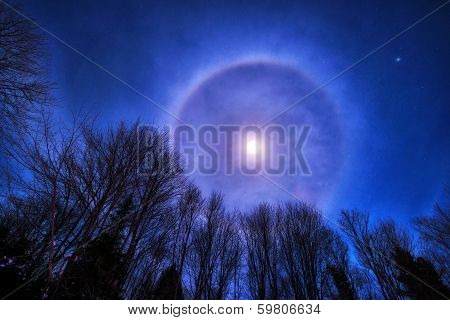 Moon Halo Over Treetops