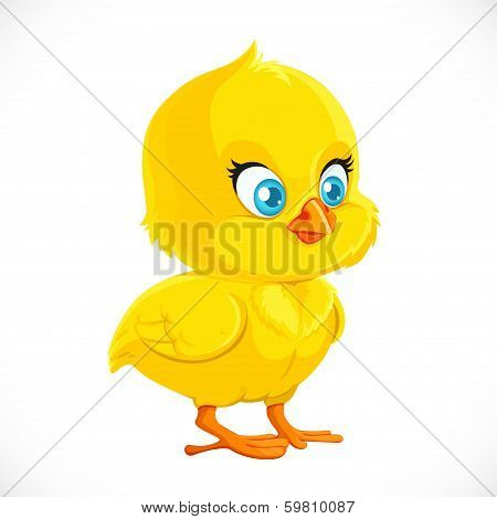 Cute Little Yellow Cartoon Chicken Isolated On A White Background.jpg