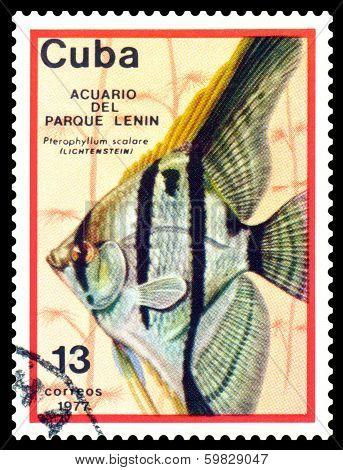 Vintage  Postage Stamp. Pterophyllum Scalare.