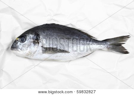 Fresh Bream Fish On White Parchment Paper