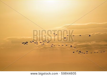 Birds Migrating On A Orange Yellow Sky