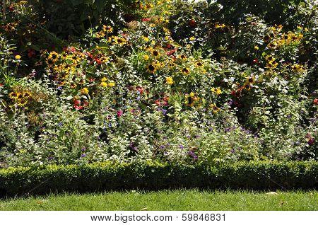 Bush of Flowers in Paris France