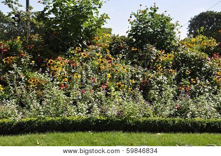 Bushes of flowers in Paris France