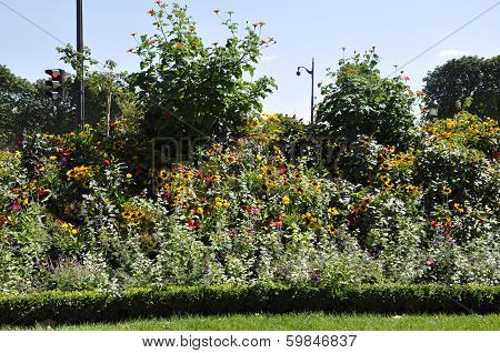 Bush of flowers