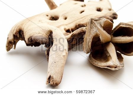 Nutshell with wooden root